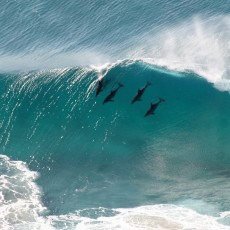 Surfers Against Sewage & Ocean Film Festival UK